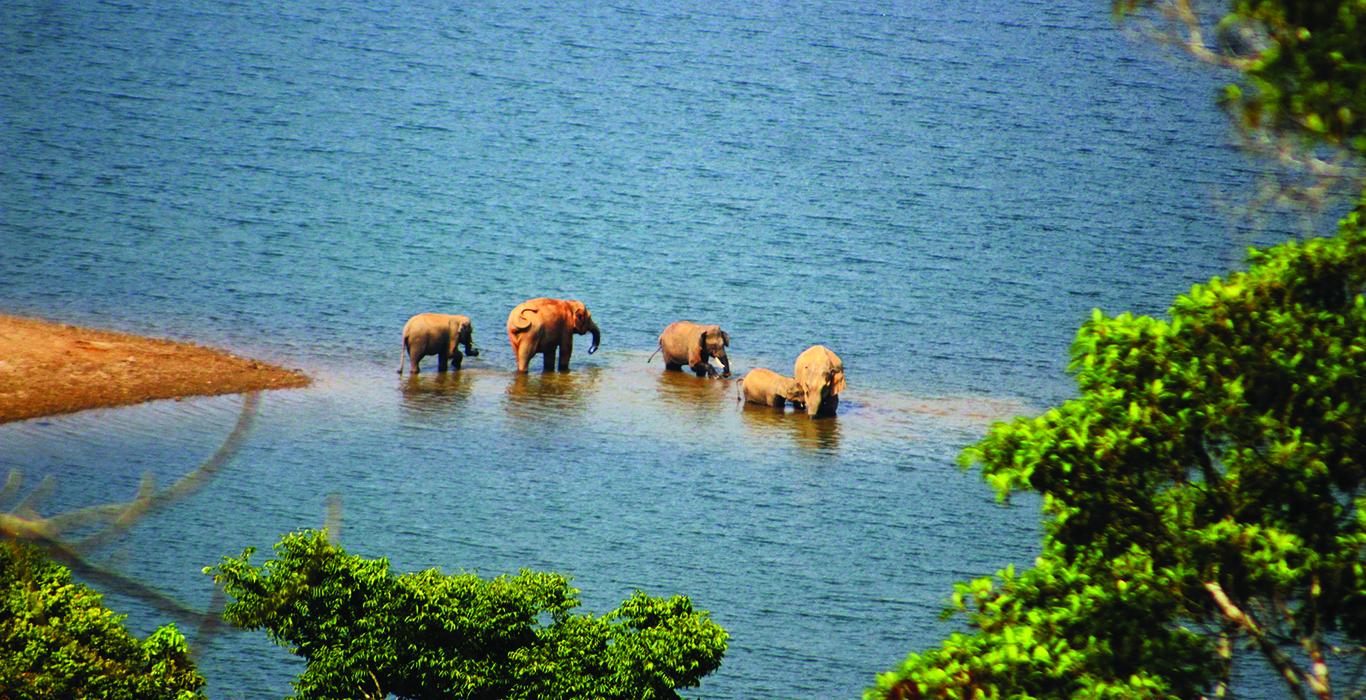 A Jungle Safari