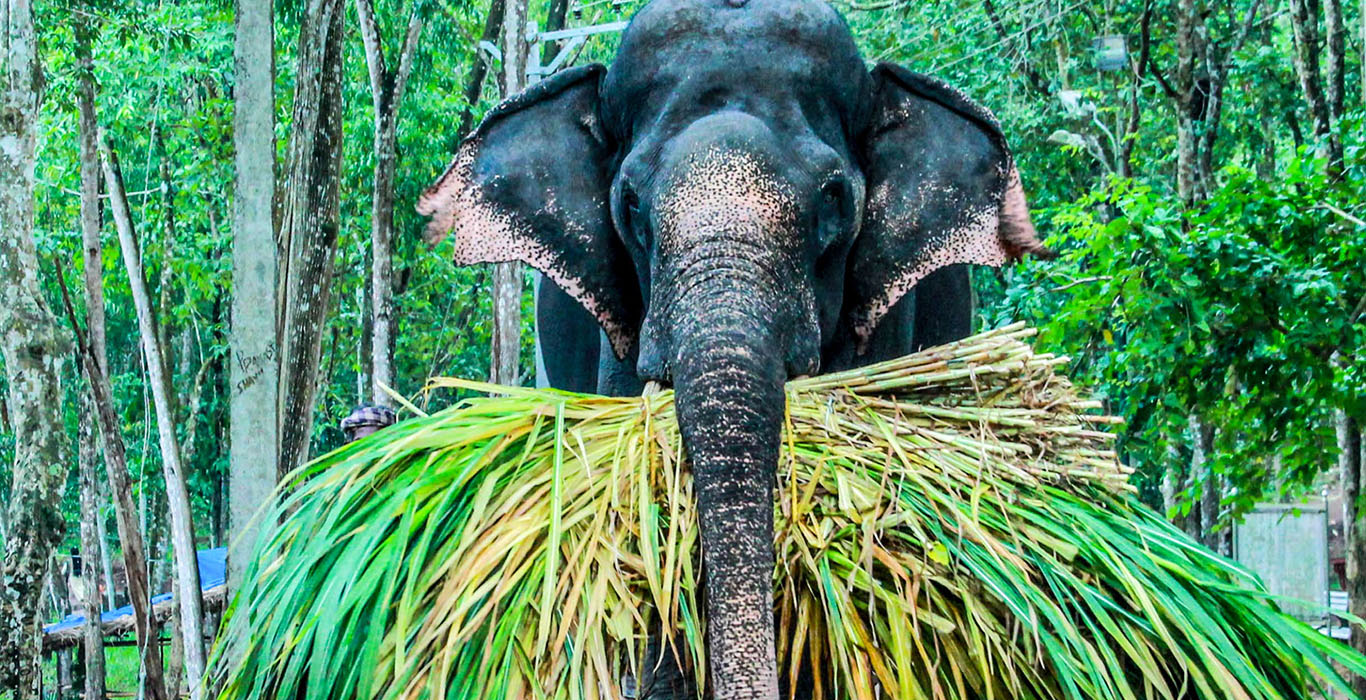 A Day Out With The  Elephants