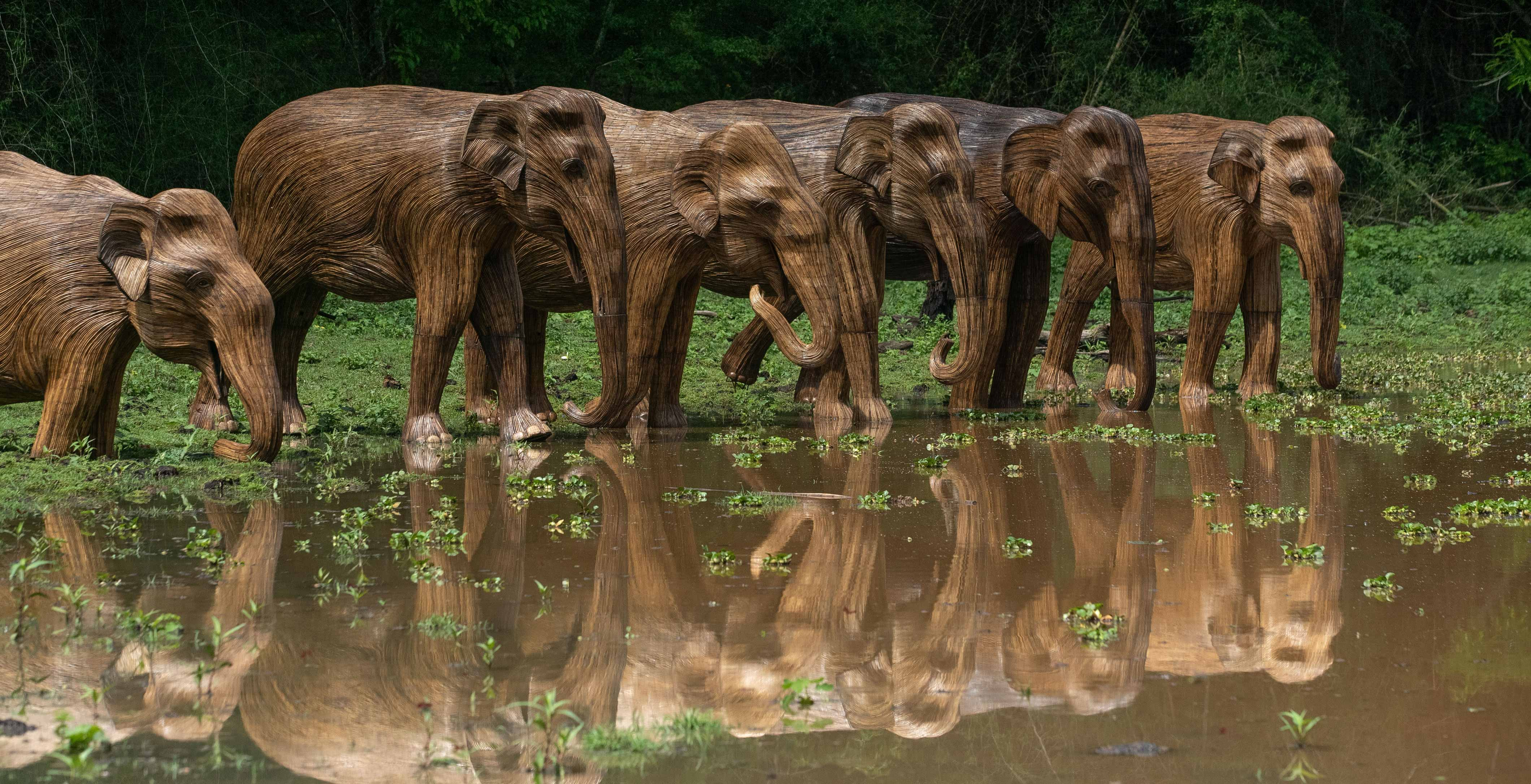 The Travelling Band of Elephants